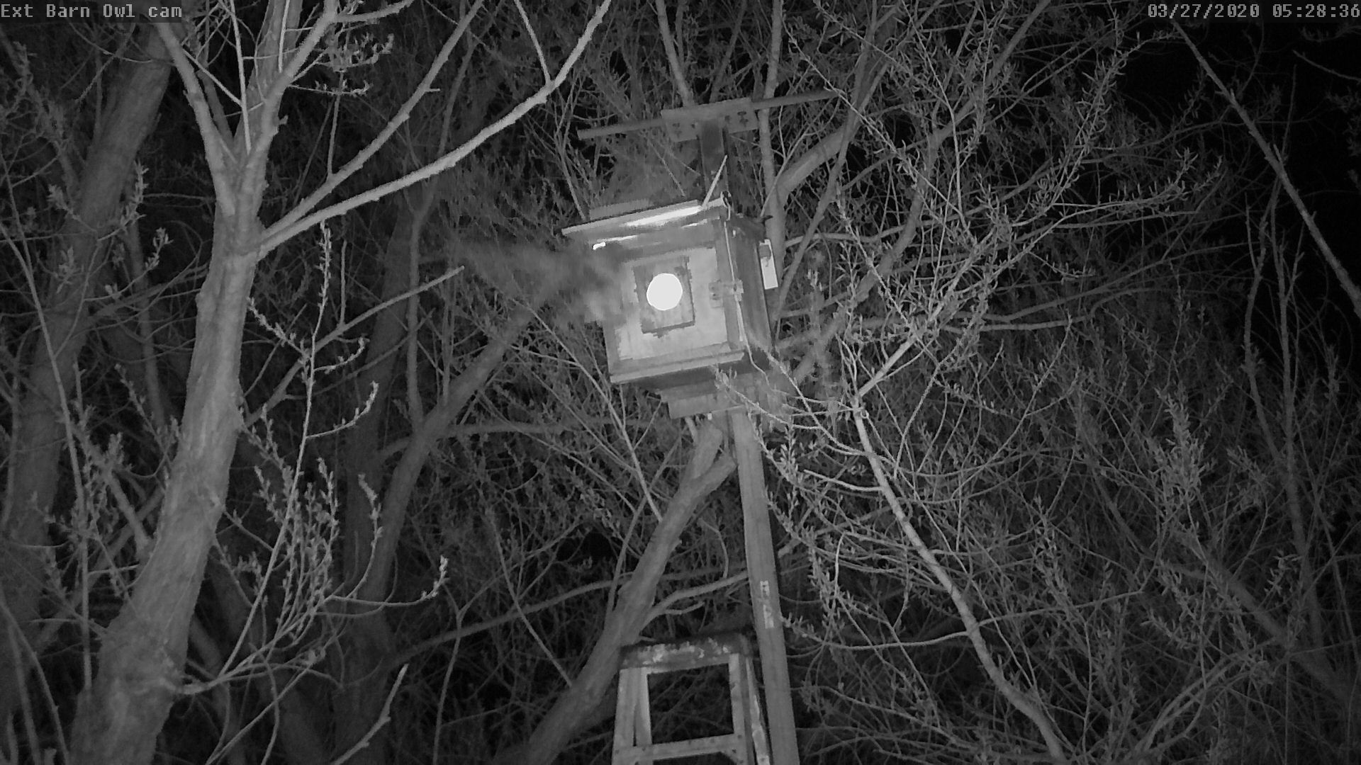 External Barn Owl Nest Cam